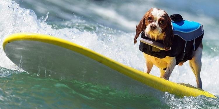04_surfdog